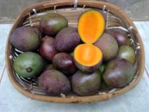 Manfaat Dari Buah Kasturi Bagi Kesehatan Tubuh, khasiat dari buah kasturi untuk tubuh kita