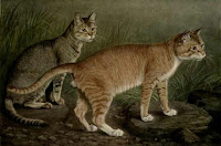 "By (From a painting by W. Luker, Jun.) (""The Book of the Cat"" by Frances Simpson) [Public domain], via Wikimedia Commons"