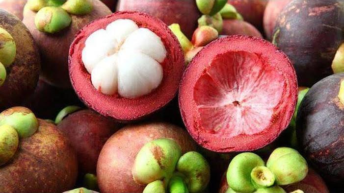 Bibit buah manggis super unggul Jakarta