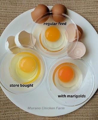 healthy farm eggs