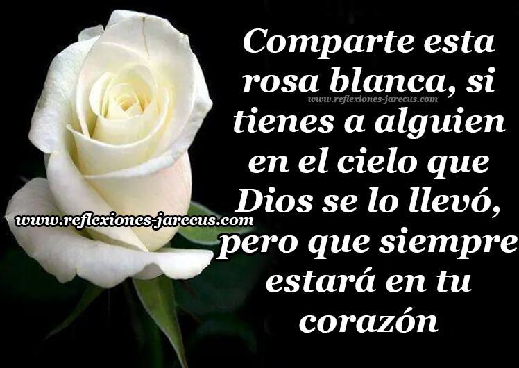 Comparte esta rosa blanca, si tienes a alguien en el cielo que Dios se lo llevó, pero que siempre estará en tu corazón