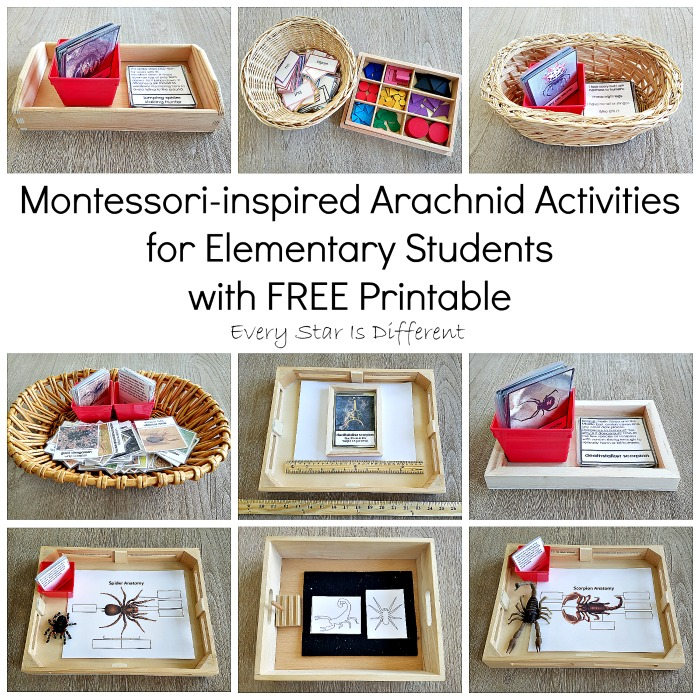 Montessori-inspired Arachnid Activities for Elementary Students with FREE Printable