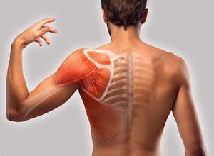 The Shocking Revelation of What Causes Pain Between Shoulder Blades