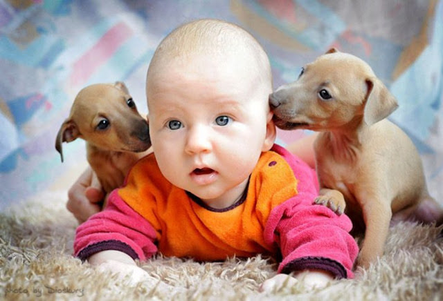Funny baby and puppies.