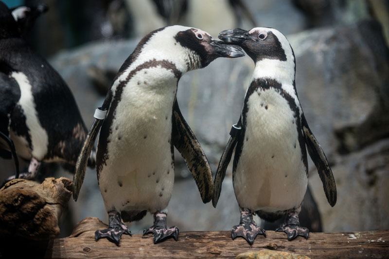 Animal cams offer a peek at a penguin or primate when you can't get to the zoo