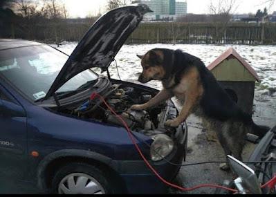 Tierischer Automechaniker mit Starthilfekabel
