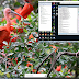 OPPO R11S CPH1719 Unbrick | Remove Lock Screen