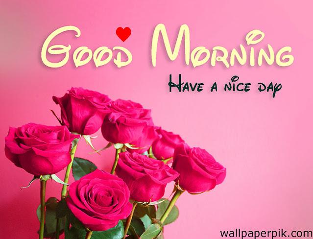gulab fool ke sath good morning 4k hd images good morning flower images free download
