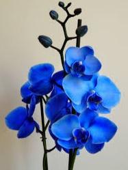 Gambar Bunga Anggrek Fourwedhe