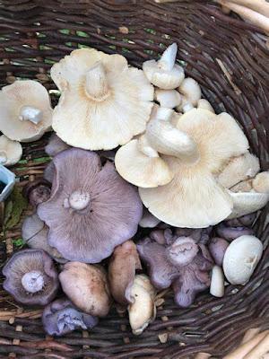 Mushroom Supplier Company in Surat