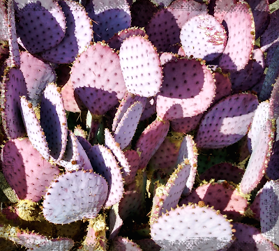 purple prickly pear santa rita cactus desert southwest