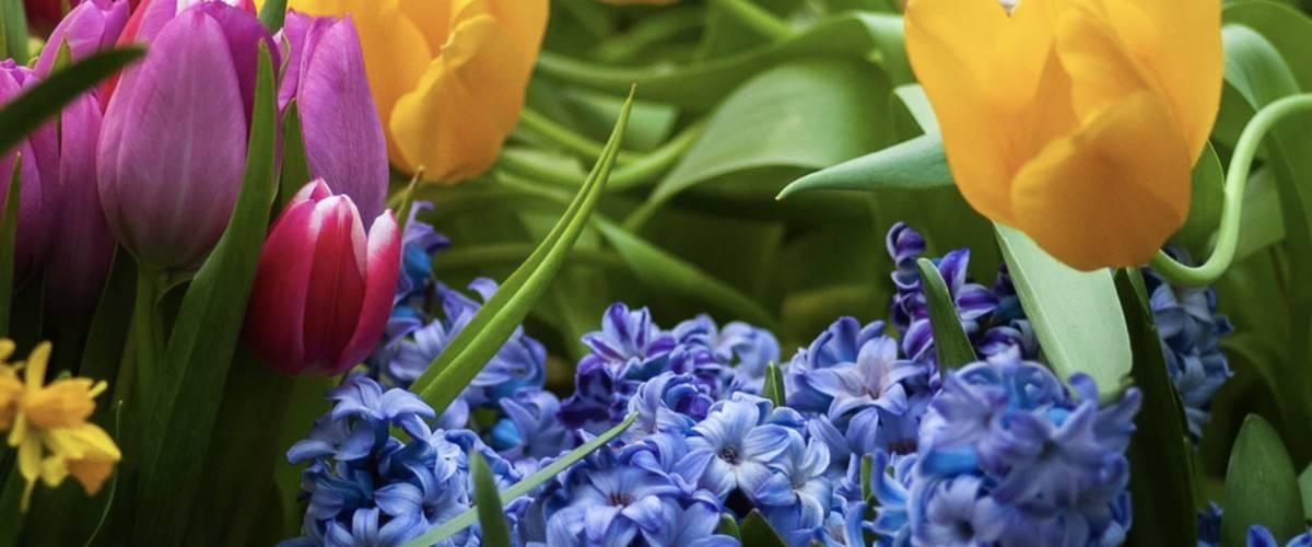 auto ajuda otimismo quarentena jardim flores lembrancas