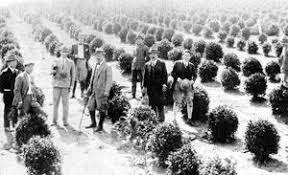 """Torazo Okamoto para trazer as sementes de chá ele escondeu dentro do miolo de pão, para """"driblar"""" a fiscalização do navio na viagem que ele fez do Japão para o Brasil em 1935."""