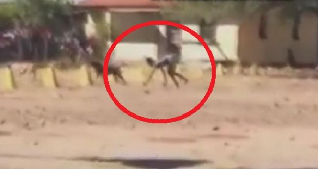 Ένα περίεργο βίντεο που δείχνει κάτι σαν ημι-ανθρώπινο σκύλο!