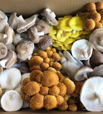 Scope of Mushroom Business in Uttar Pradesh