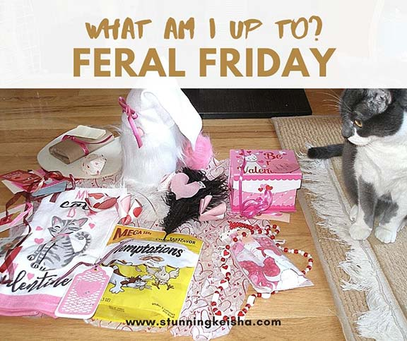 Feral Friday: What Am I Up To?