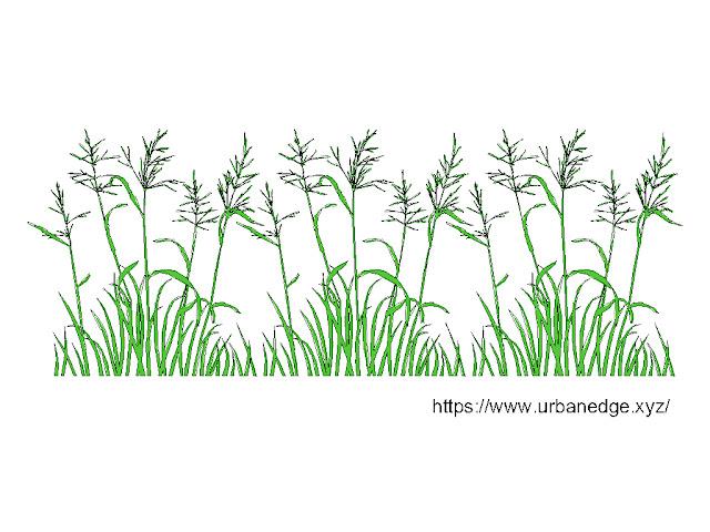 Grass elevation cad block, Grass autocad block, Grass cad block