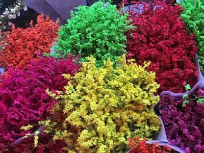 Hoa sao khô tẩm phẩm màu độc hại 'bung lụa' dịp Tết Đinh Dậu 2017