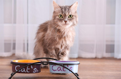 Cat Stops Eating: Causes and Solutions
