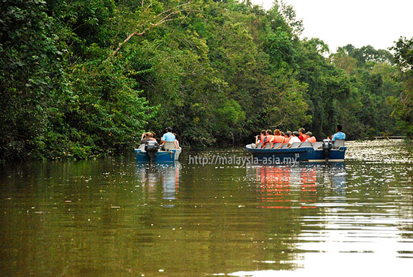 Wildlife Watching Kinabatangan River