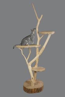 Gato sobre un rascador de madera