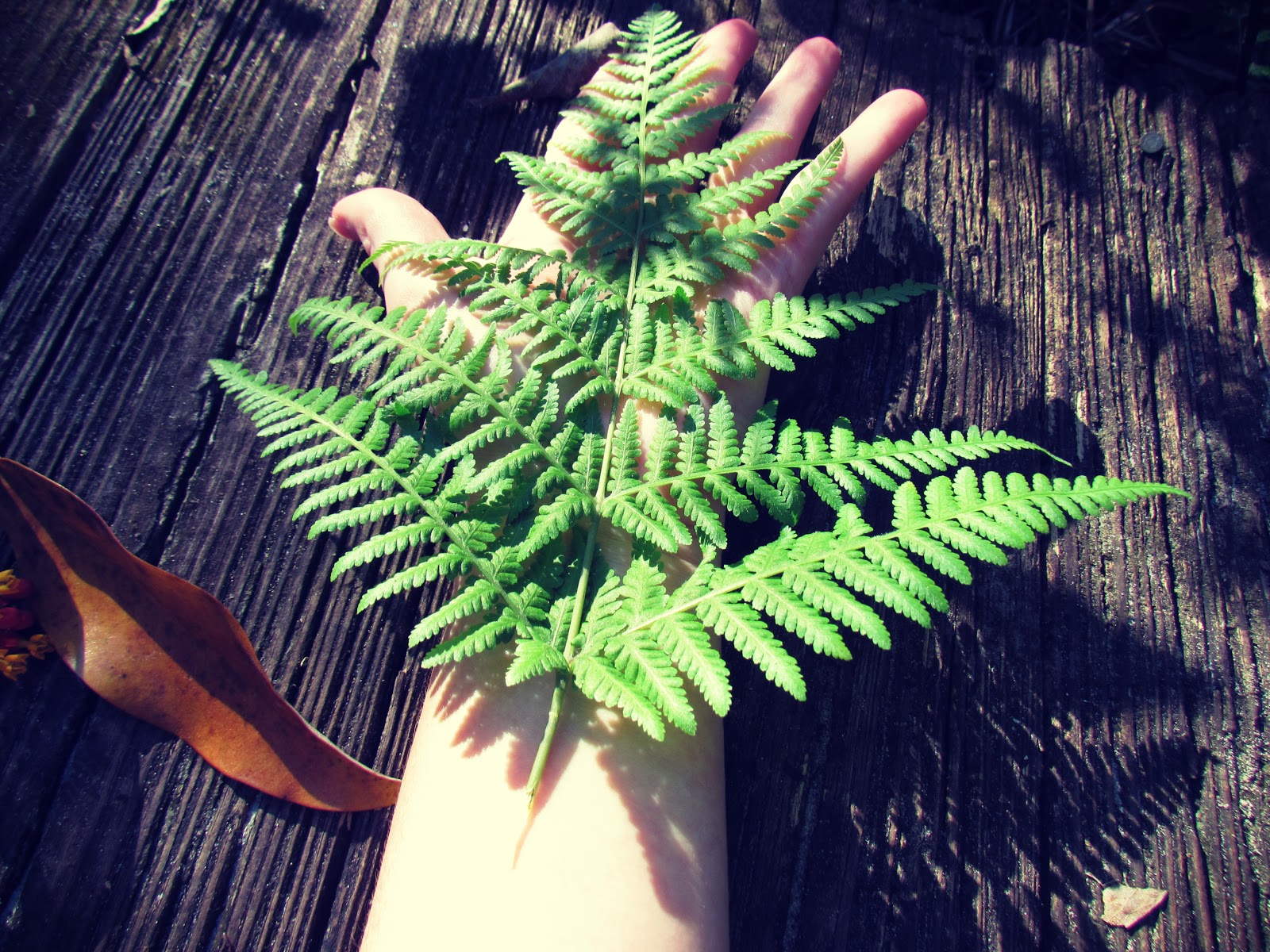 A female arm with pale skin and a fern leaf stretching across the arm in a natural body art pose with woodland textiles and crisp autumn leaves on a hiking trail in Hammock Park in Dunedin, Florida on a wilderness hiking adventure