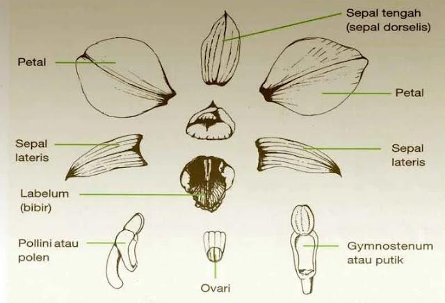 Ciri-Ciri Bunga Anggrek Sebagai Tanaman Hias yang terlihat Eksotis