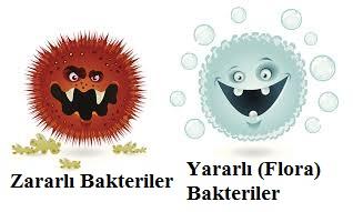 Flora Bakterileri-Yararlı Bakteriler