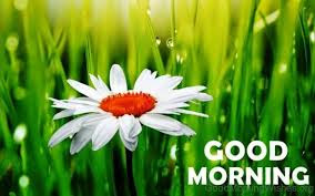 good morning images with flower