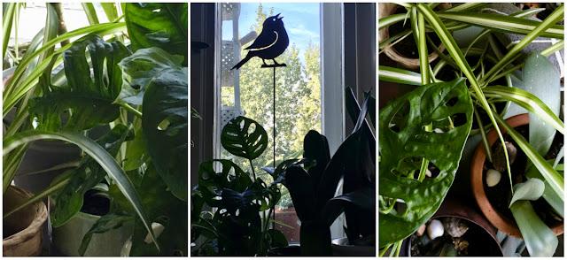 Diverse Pflanzen in unterschiedlichen Formen, zum Teil im Gegenlicht