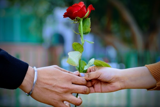 Find Out 6 Types of Roses with Its Meaning || Rose Day images with quotes