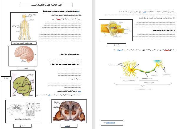 صور جيدة لمقطع التنسيق الوظيفي في العضوية علوم طبيعية للاستاذة سعيدي دليلة