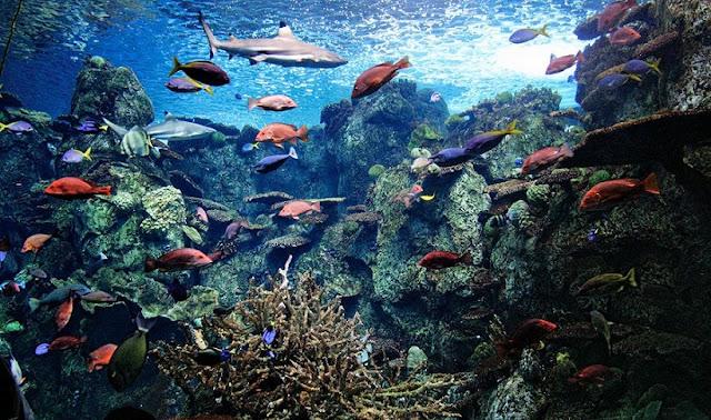 Aquários do Aquário do Pacífico em Long Beach