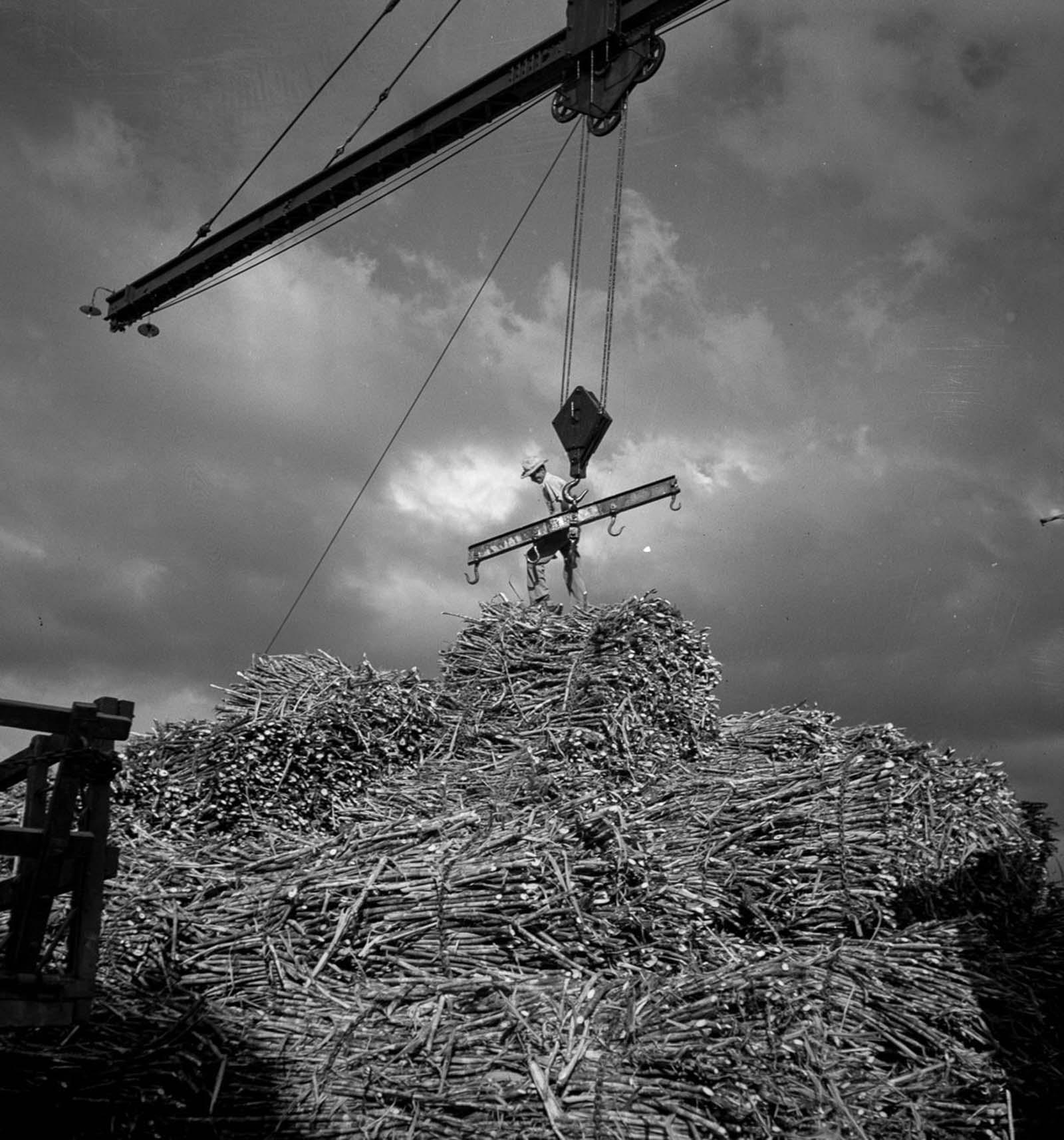 A worker unloads sugarcane at a depot in San Sebastian.