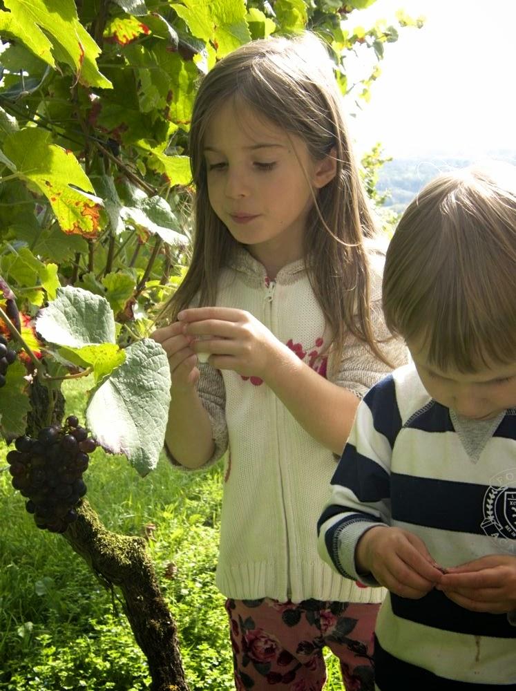 Kinder im Weinberg bei der Weinlese