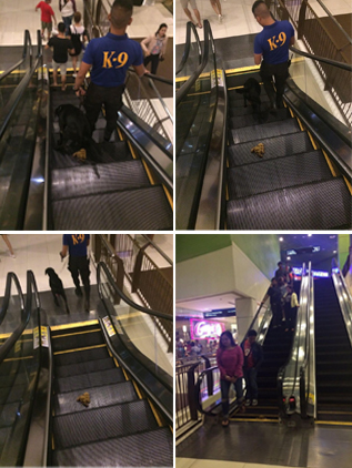 Yuck! K-9 Dog Left a Smelly Mess On An Escalator in a Davao City City Mall
