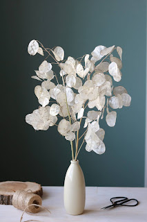 MONEY PLANT aka Lunaria Silver Dollar dried seed pods in a white vase.
