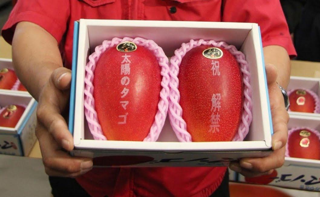Record in Giappone: venduta coppia di manghi a prezzo d'oro