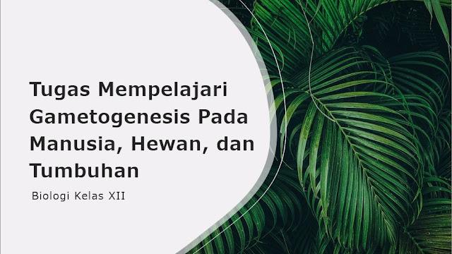 gametogenesis pada hewan manusia dan tumbuhan