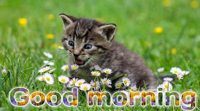 Good morning Rose gif