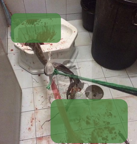 snake bites penis thailand