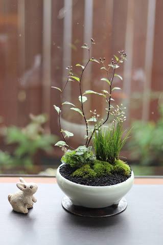 山野草盆栽教室作品例 キヨスミシラヤマギク イトラッキョウ コバノタツナミソウ