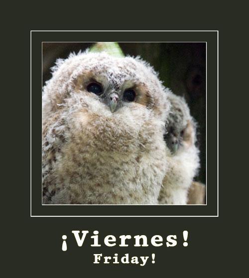 fluffy-owls