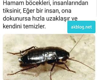 Hamam Böcekleri Nedir