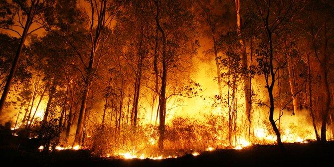 Karhutla di Riau Telan Korban Jiwa, Seorang Warga Tewas Terbakar di Ladang