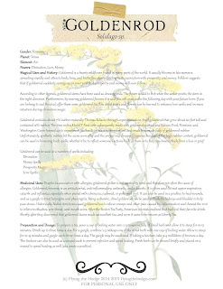Magical and Medicinal Uses of Goldenrod