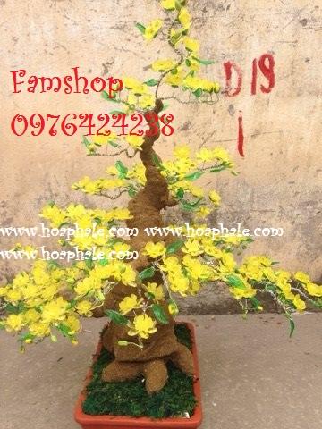 Goc bonsai cay hoa mai tai Hoan Kiem