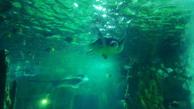 turtle and stingray - Brighton Sea Life Centre