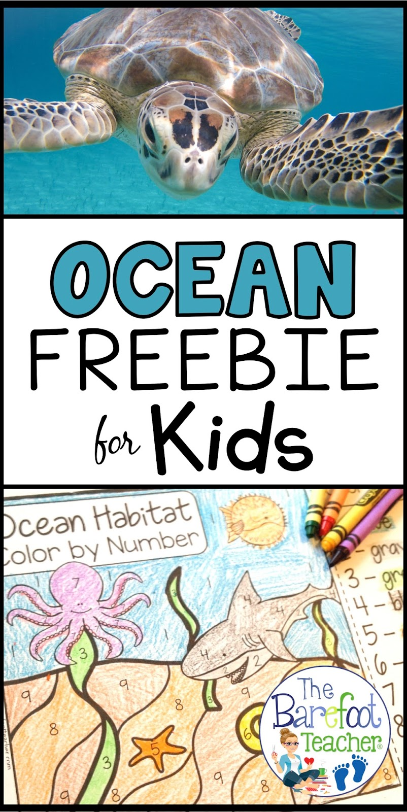 Whats in the Ocean Activities for Kids Part 2 | The Barefoot Teacher
