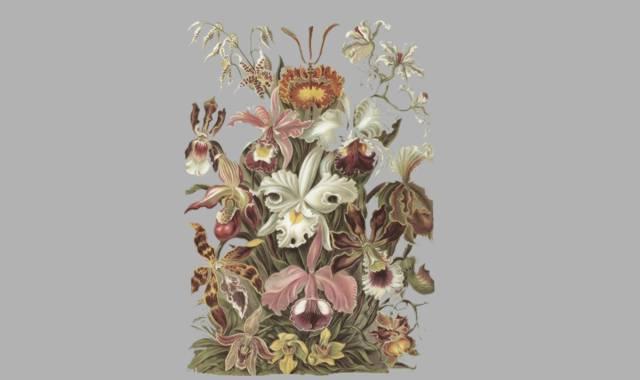 verschiedene Blumen -Naturgedichte